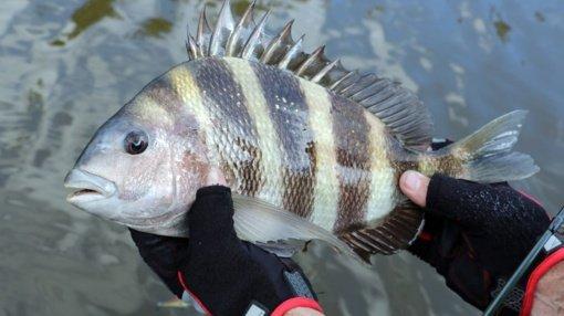 Paslaptinga žuvis gąsdina paplūdimio lankytojus