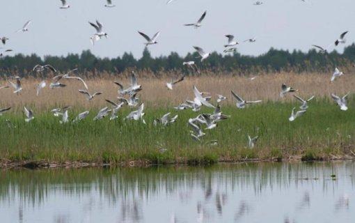 Medžiojant paukščius nebegalima naudoti švininių šratų