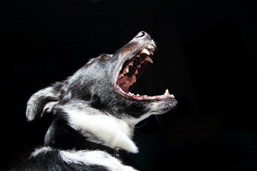 Kelmės rajone  šuns išgąsdintas vyras nesuvaldė motociklo