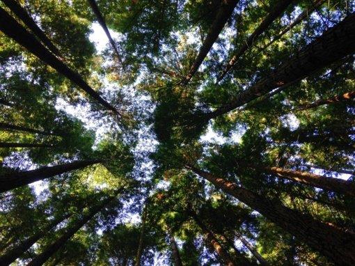 Trečdaliui pasaulio medžių šiuo metu gresia išnykimas