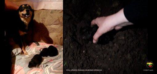 Šiaulių rajone veterinarijos inspektoriai ir savanoriai iš po žemių vadavo gyvus užkastus šuniukus