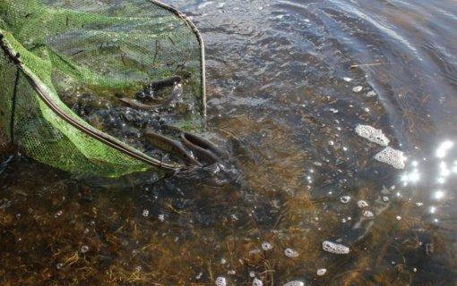 Praėjusią savaitę apie galimus aplinkosauginius pažeidimus gauti 372 pranešimai