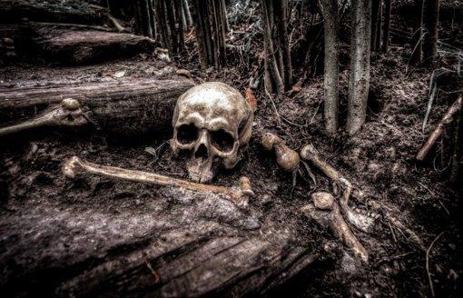 Kėdainių rajone rasta žmogaus kaukolė ir kaulai