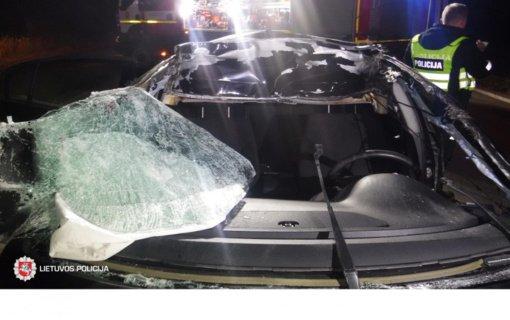 Kretingos rajone automobilis susidūrė su briedžiu: du žmonės išvežti į ligoninę
