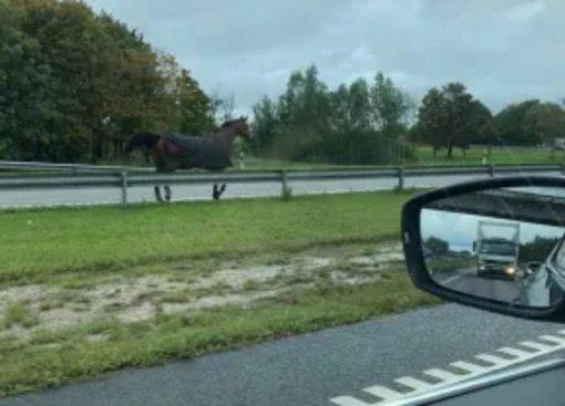 Įspėja kauniečiai: magistraliniame kelyje A1 blaškosi žirgas