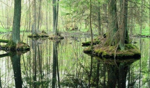 Žuvintas mini dešimties metų sukaktį UNESCO biosferos rezervatų tinkle