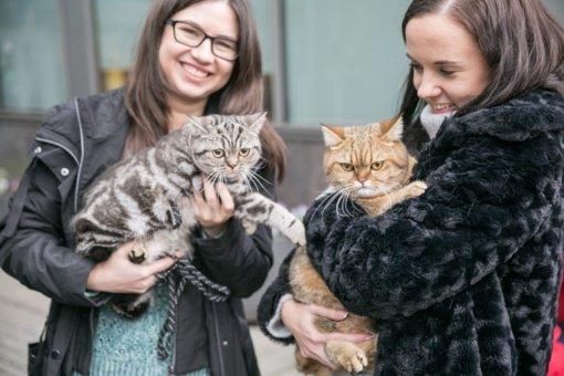 Pasaulinę gyvūnijos dieną augintinių mylėtojus džiugins šventė prie Baltojo tilto