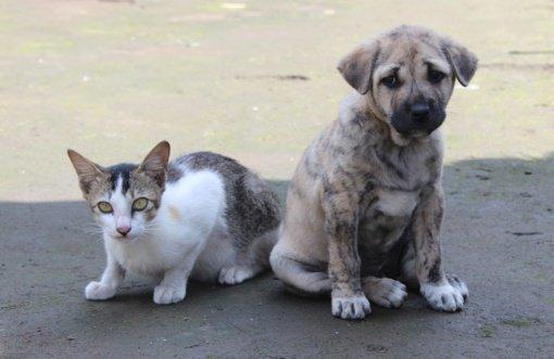 Iš nelegalaus veisėjo Marijampolėje konfiskuoti 37 gyvūnai
