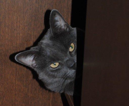Kačių magija – nuo sėkmės simbolio iki likimo lėmėjo