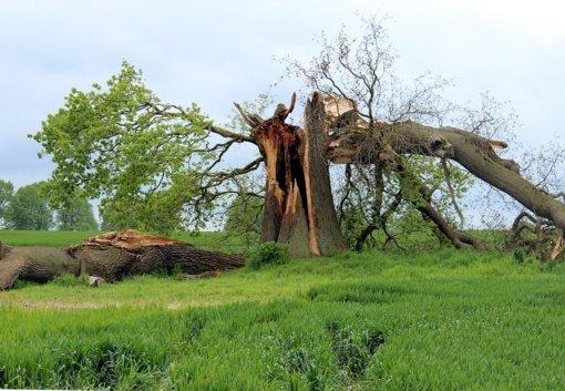 Pranašaujant stiprų vėją, draudikai pastebi tendenciją – stichinių nelaimių nuostoliai šiemet jau rekordiniai