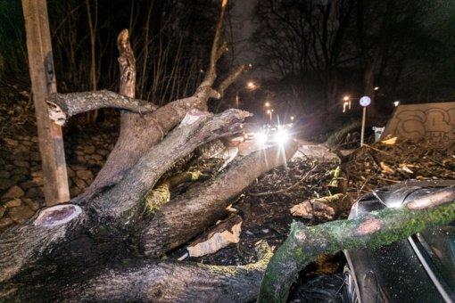 Dėl smarkaus vėjo ugniagesiai 18 kartų vyko šalinti nuvirtusių medžių