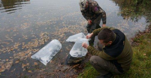 Dailidės ežerėliuose apsigyveno beveik du šimtai baltųjų amūrų