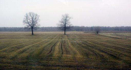 ŽŪM: ūkininkams išmokėta beveik 300 mln. eurų tiesioginių ir kompensacinių išmokų avansų