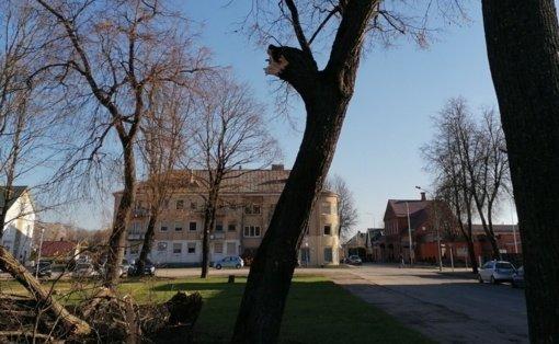 Dėmesio Biržų gyventojams: J.Janonio aikštėje – pavojingi medžiai