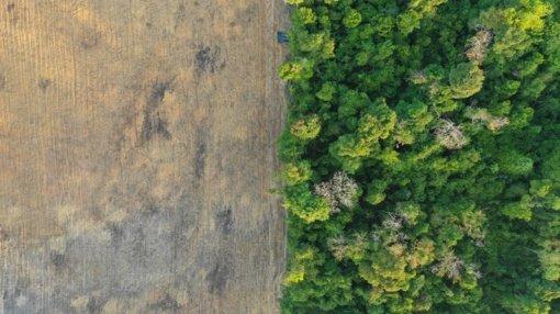 """Mokslininkė B. Galdikas atkreipė dėmesį dėl kertamų miškų: """"Rodykite pasauliui pavyzdį"""""""