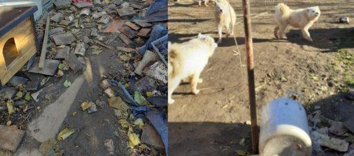 Raseinių rajone rasta nelegali veisykla, šunys buvo laikomi žiauriomis sąlygomis
