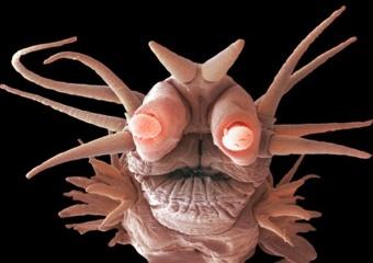 Dėl bakterijų vandenyje – tylos siena