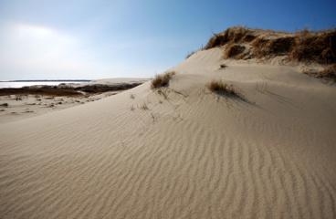 Kuršių nerijos kopose stabdomas smėlis