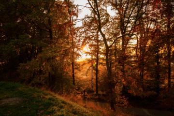 Tęsti darbus valstybiniame miškų sektoriuje atsisakė nedidelė dalis darbuotojų