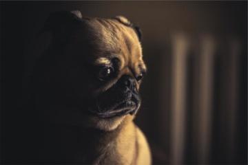 Siūloma griežčiau bausti už žiaurų elgesį su gyvūnais