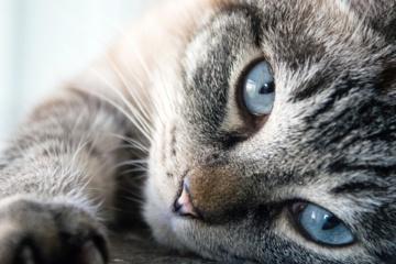 Italija: katinas paveldėjo 30 tūkstančių eurų