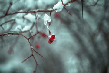 Orai: bus šilčiau, bet atkeliaus nemalonūs reiškiniai