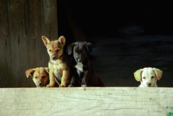 Lietuviško augintinio išlaidų krepšelis: šeimininkams svarbiausia, kad gyvūnas būtų sotus