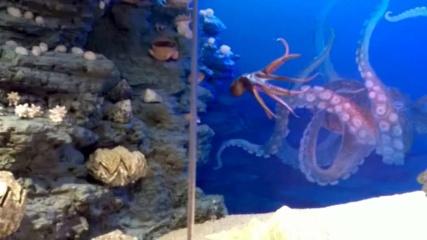 Daugėdiškių pažintis su povandeniniu pasauliu