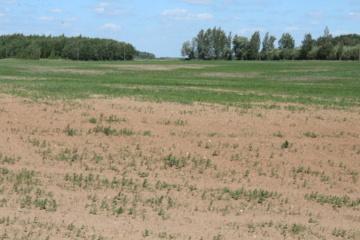 Ūkininkai prašo Rokiškio rajone skelbti ekstremalią situaciją dėl sausros