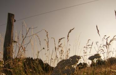 Vilkaviškio rajone rastas elektrinio piemens mirtinai sužalotas žmogaus kūnas