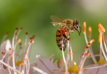 Įdomūs faktai apie bites ir medų