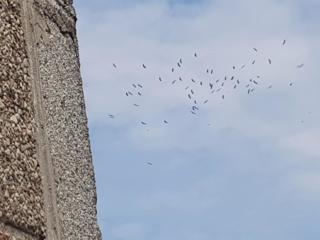 Gandrai ruošiasi kelti sparnus