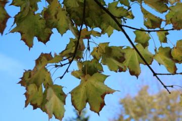 Orai: spalis stebins ir toliau, tačiau pokyčiai jau ne už kalnų