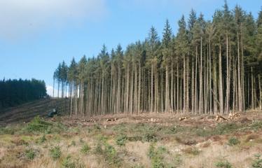 Stambios miško vagystės užfiksuojamos ir Utenos apskrityje