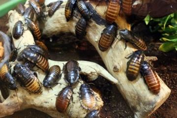 Pasaulyje sparčiai nyksta vabzdžiai