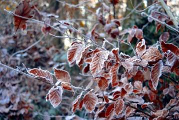 Orai: žiema jausis vis drąsiau