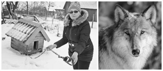 Judrėniškiai dėl dingstančių šunų įtaria vilkus
