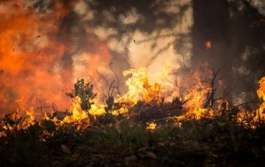 Gesindamas degančią žolę vyras apdegė veidą