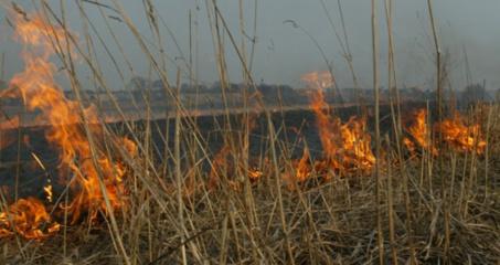 Savaitės gaisrai – piktybiškai deginama žolė