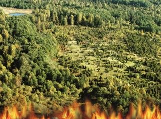 Neatsargus gyventojų elgesys sukelia miško gaisrus