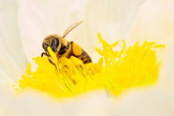 Kokios bus Velykos žiedadulkėms alergiškiems žmonėms?
