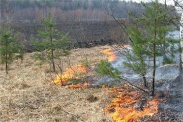 Šiomis dienomis miškams – sustiprinta priešgaisrinė apsauga