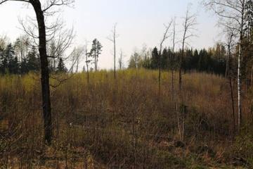 Atkurti ir apsaugoti miškus padeda parama