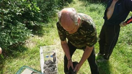 Protu nesuvokiama: šimtą šinšilų išmetė miške žūti plėšrūnų nasruose