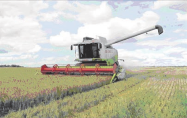 Apie šiųmetį derlių