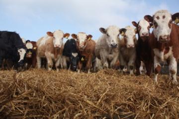 """Pieno gamintojai """"griebsis šiaudo"""" – žada blokuoti perdirbėjus"""