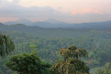 Norėdami išsaugoti tropinius miškus žmonės turi keisti savo... mitybą