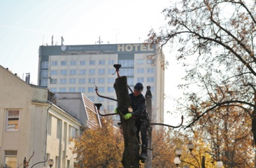 Medžių gynėjus išgąsdino ne piniginės baudos, o žmonių abejingumas