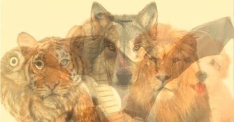 Gyvūnas, kurį pamatėte pirmą atskleis jūsų charakterio ypatybes!