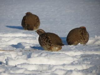 Specialistų išvados kelia nerimą: šalyje sparčiai nyksta net įprastų paukščių populiacijos